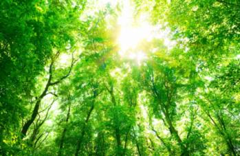 VIDEO + 1 PDF -  Le message puissant des plantes